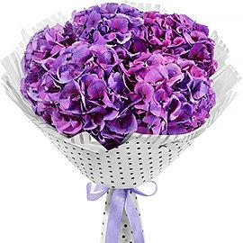 Букет из фиолетовых гортензий