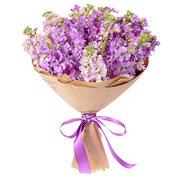 Маттиола - Фиолет