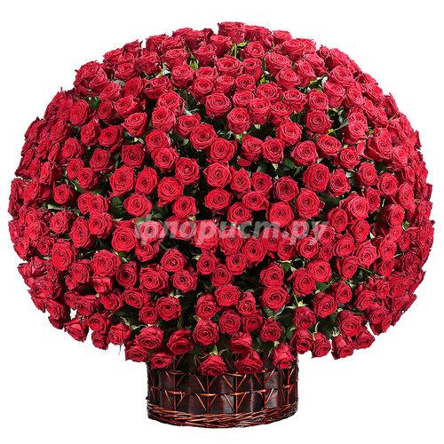 "Корзина ""501 Красная Роза"""