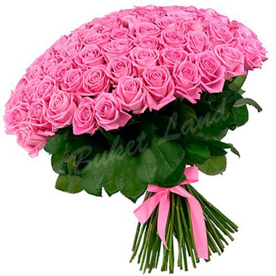 Роза Аква 60 см  101 шт.