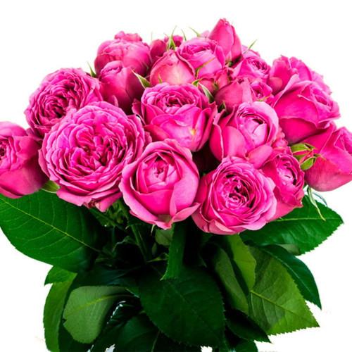 11 пионовидных малиновых роз