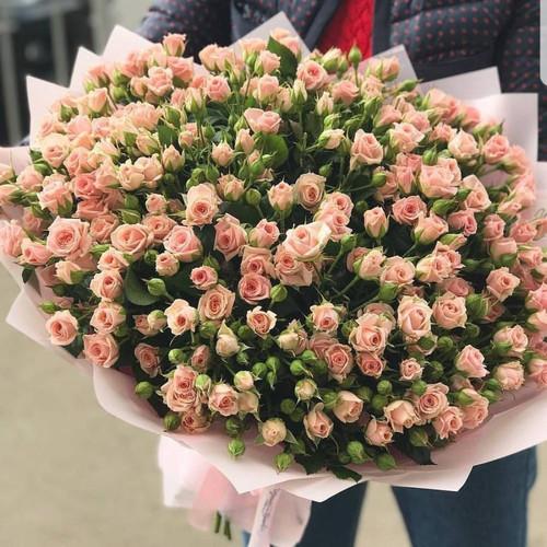 Ветка спрей-розы Яна