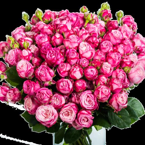 35 пионовидных роз