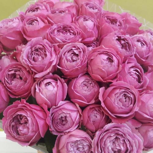 19 пионовидных малиновых роз
