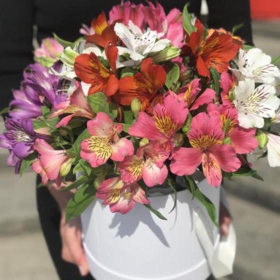 Цветы в коробке 19 Шикарных свежих Альстромерий микс Голландия «Счастье»