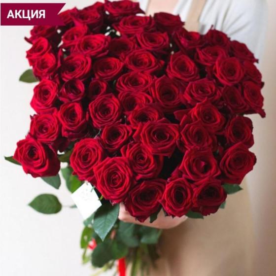 "51 красная роза ""Эксплорер"" на ленте"