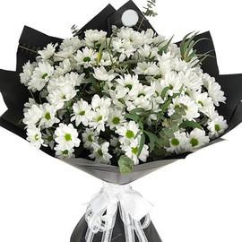 Хризантема баккарди