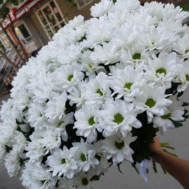 """""""Ромашковое облако"""" из 15 кустовых хризантем"""
