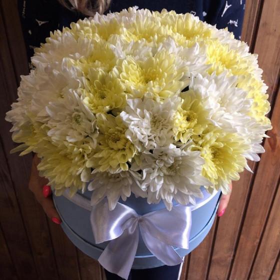 Ароматная хризантема