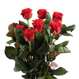 Роза Эль Торо 60 см 7 шт. в крафте