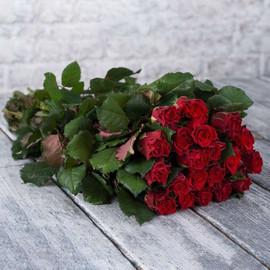 Роза Эль Торо 60 см 19 шт. в крафте