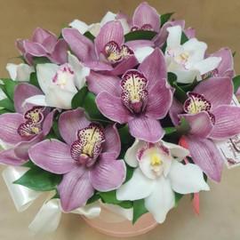 Цветы в коробке «Миксовая орхидея»