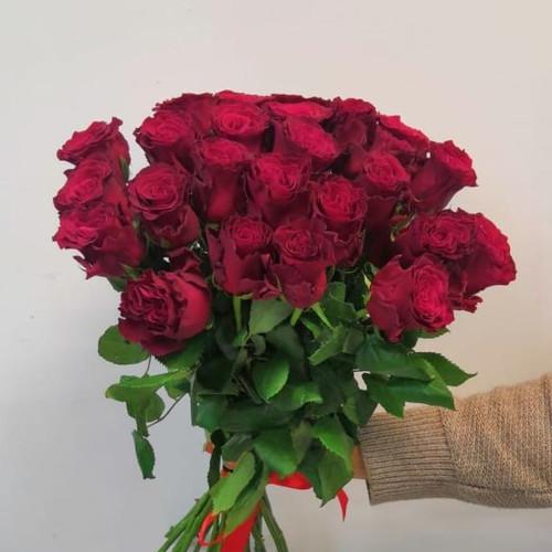 Роза Голландская