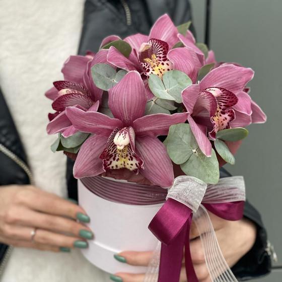 Коробка с цимбидиумом Розовый Клэр