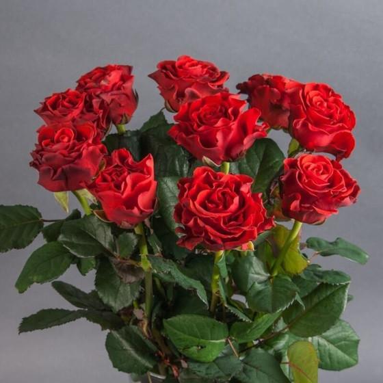 Роза Эль Торо 60 см 9 шт. в крафте