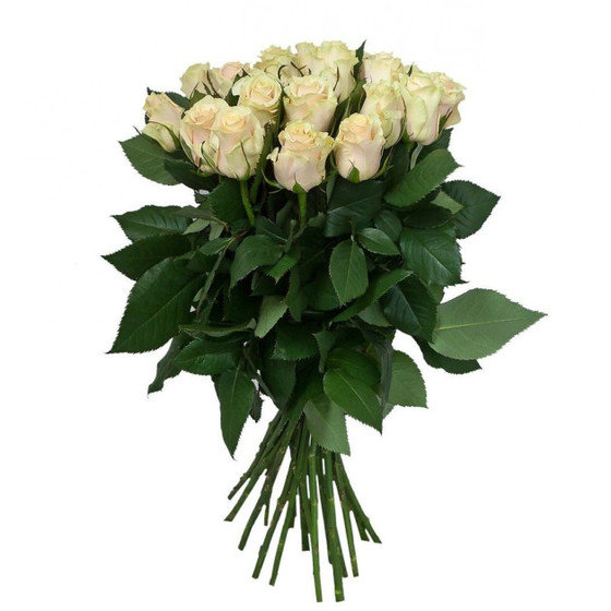 Роза талея 60 см, 21 шт. в крафте