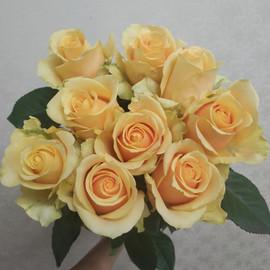 Роза Пич Аваланж 60 см 9 шт. в крафте