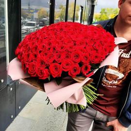 151 бордовая роза