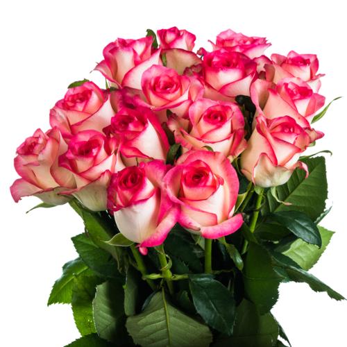 15 розово-белых роз