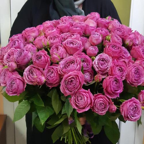 101 малиновая пионовидная роза